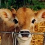 stop animal farming