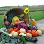 Vegan Transition Tips learned through my vegan journey so far