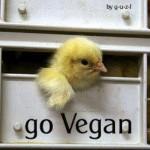 ask a vegan