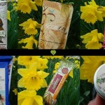 Vegan products Review – TheVeganKind.Com