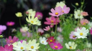 superb flower